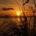 Sunset Through the Reeds by rickster549