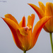 Natural Orange Tones by pcoulson