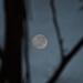 Moon #6