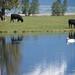 Montana Pastoral Scene