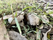 5th Jun 2021 - Mushrooms