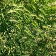 2nd Jun 2021 - meadow flora