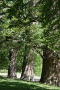 3rd Jun 2021 - Three trees.