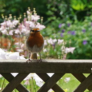 3rd Jun 2021 - on the fence