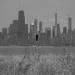Blackbird enjoying the Chicago Skyline