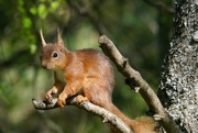 3rd Jun 2021 - YOU PUT MY NUTS OUT YET ?