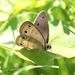 Return of the butterflies