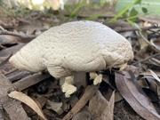 6th Jun 2021 - Mushroom