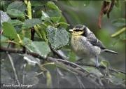 4th Jun 2021 - Such lovely little birds