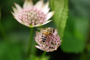 4th Jun 2021 - Bee