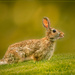 bunny by jernst1779