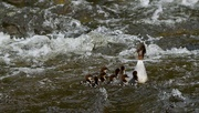 4th Jun 2021 - NOW CHILDREN, FIRST LESSON IS HOW TO SWIM !