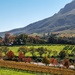 Autumn in the winelands