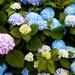 Flower Mode by linnypinny