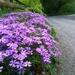 Blooming  roadside