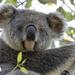 royalty by koalagardens