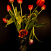 Tulips, not from Amsterdam by mv_wolfie