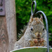 Nibbling Nuts