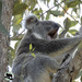 am I boring you? by koalagardens