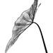 Sculptured leaf