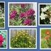 June flower collage.
