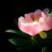 Eden's Bloom