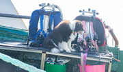 7th Jun 2021 - Dug the Dive Boat Dog