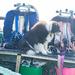 Dug the Dive Boat Dog