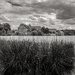 Beyond the Reeds...