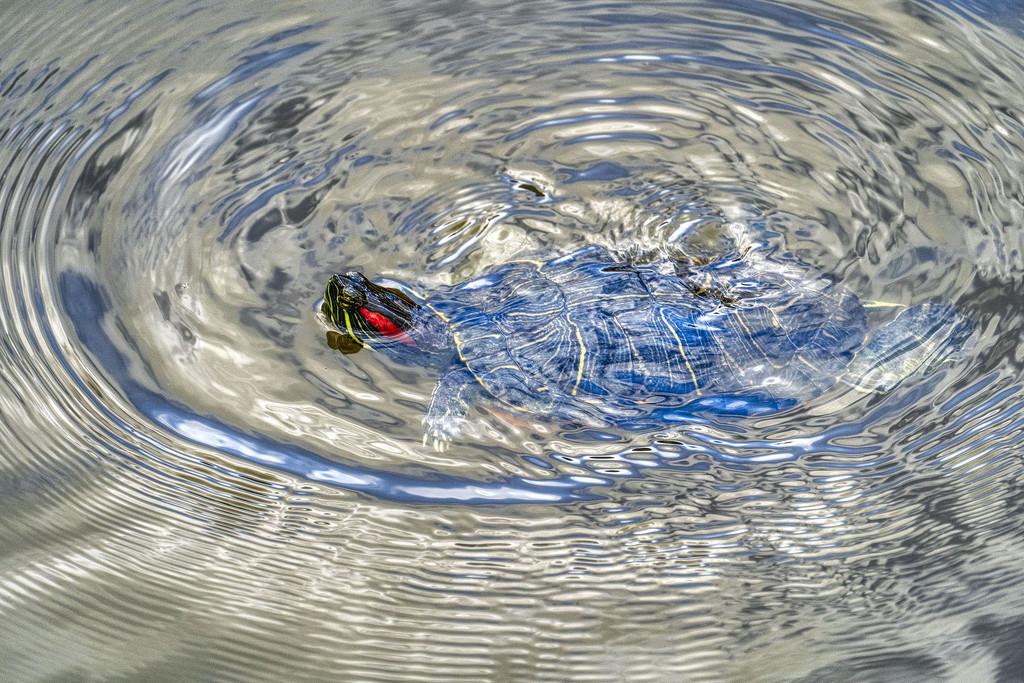 Swimming Wild & Free by kvphoto