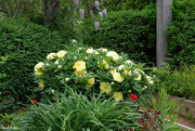 7th Jun 2021 - Flowers of spring