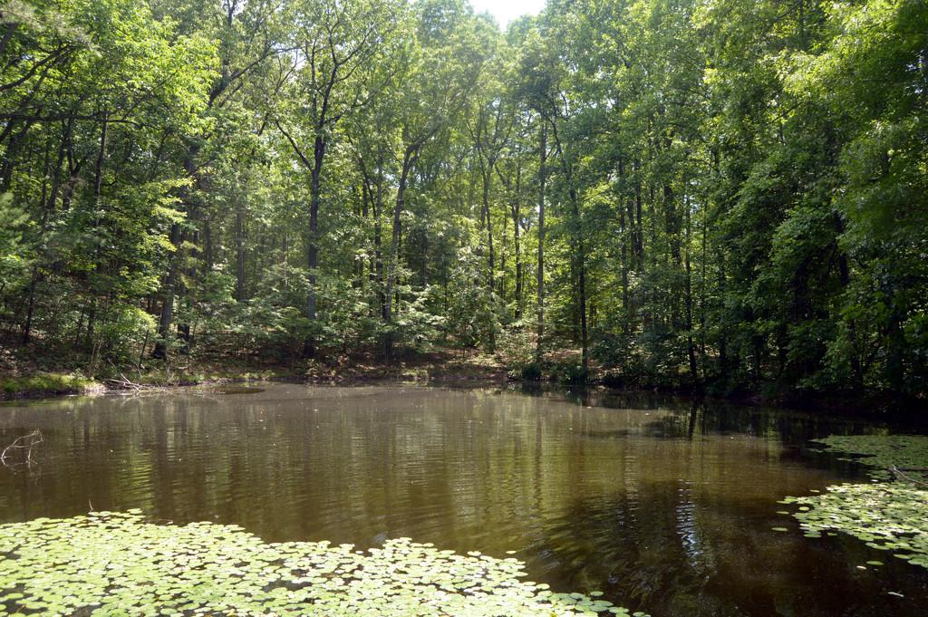 pond by francoise