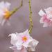 Hanging Oleander flowers