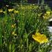 30 Days Wild 8 - School pond