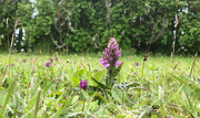 8th Jun 2021 - Return of the Orchids