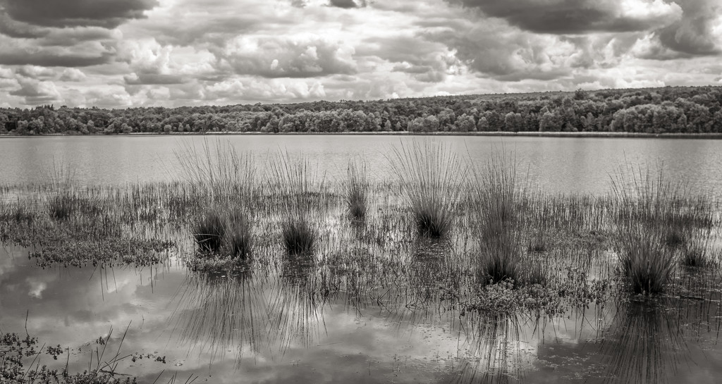 Reeds & Sky Reflections... by vignouse