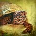 Box Turtle by samae