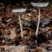 Still fungi time