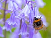 9th Jun 2021 - Pollen Gatherer