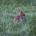 I see a bunny in my yard