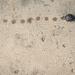 Snail Tracks