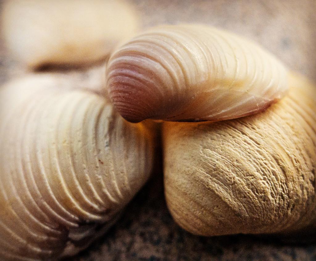 Shell game by jeffjones