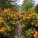 To the Azalea Garden