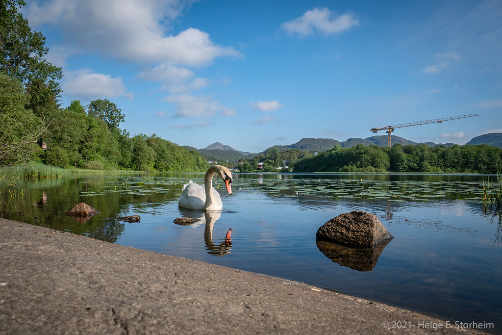Swan and crane :-) by helstor365