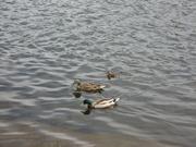 9th Jun 2021 - Donald Duck Day
