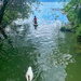 Following the swan.