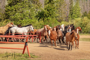 9th Jun 2021 - Here Come the Horses
