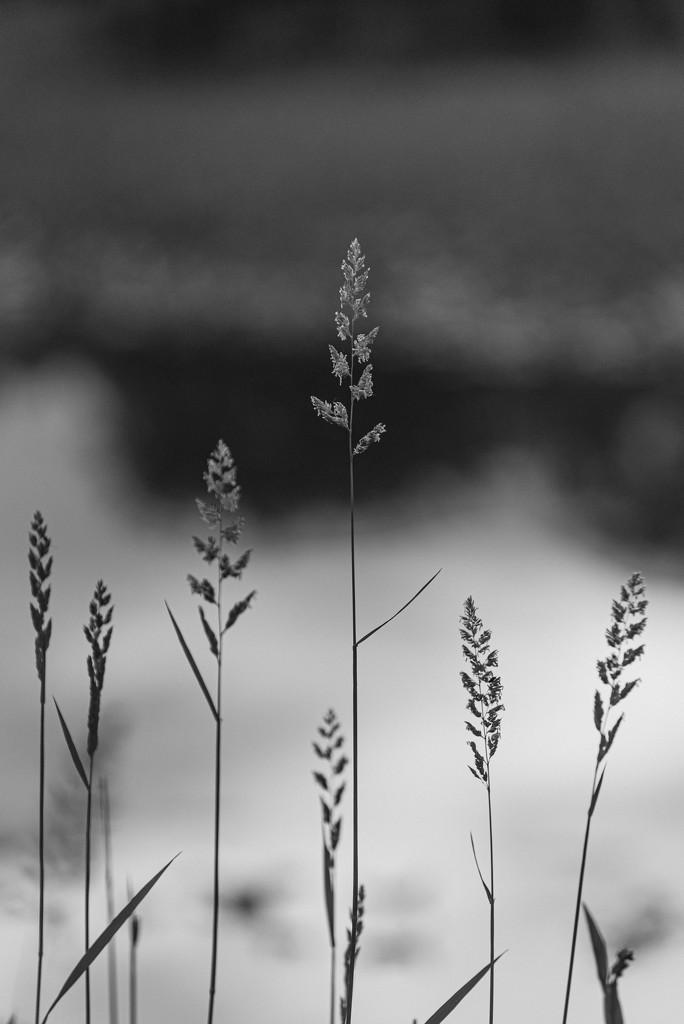 minimalism by jackies365