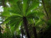 1st Jun 2021 - Tree fern