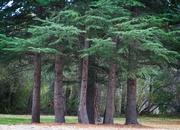 2nd Jun 2021 - Tree henge